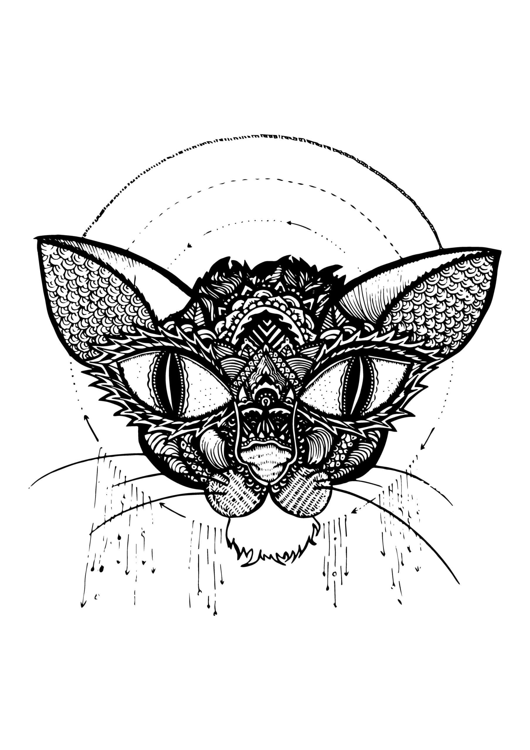 Illustration Le chat